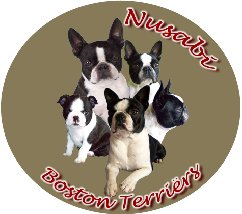 logo_nusabi_boston_terriers